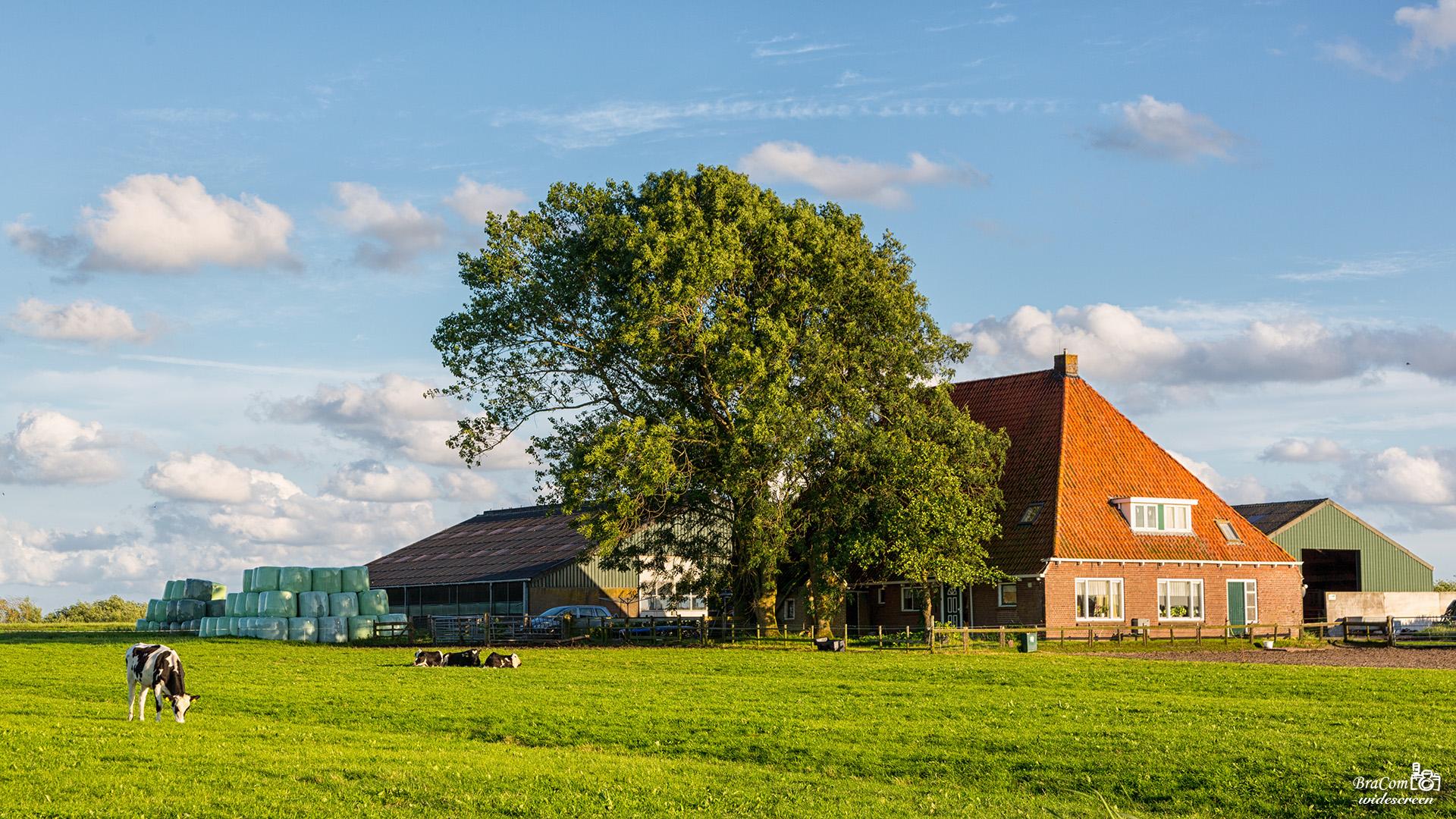 Westfriesland landschap